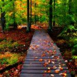 صور طبيعية , اروع صور للطبيعة