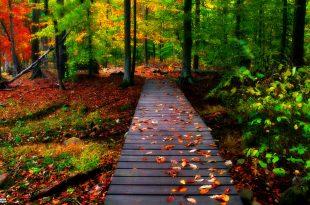 صورة صور طبيعية , اروع صور للطبيعة