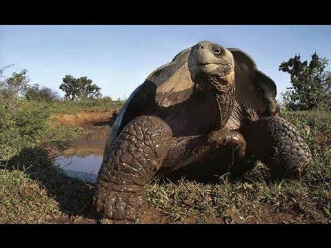 صور اكبر حيوان في العالم , صور لاكبر حيوان فى العالم