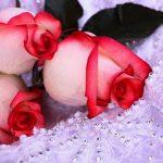 اجمل ورود في العالم , اجمل الكلمات عن الورد واحلى الصور