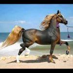 اجمل خيول في العالم , اجمل كلمات عن الخيل