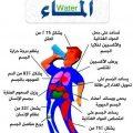 فوائد شرب الماء , شرب الماء مفيدا لجسم الانسان