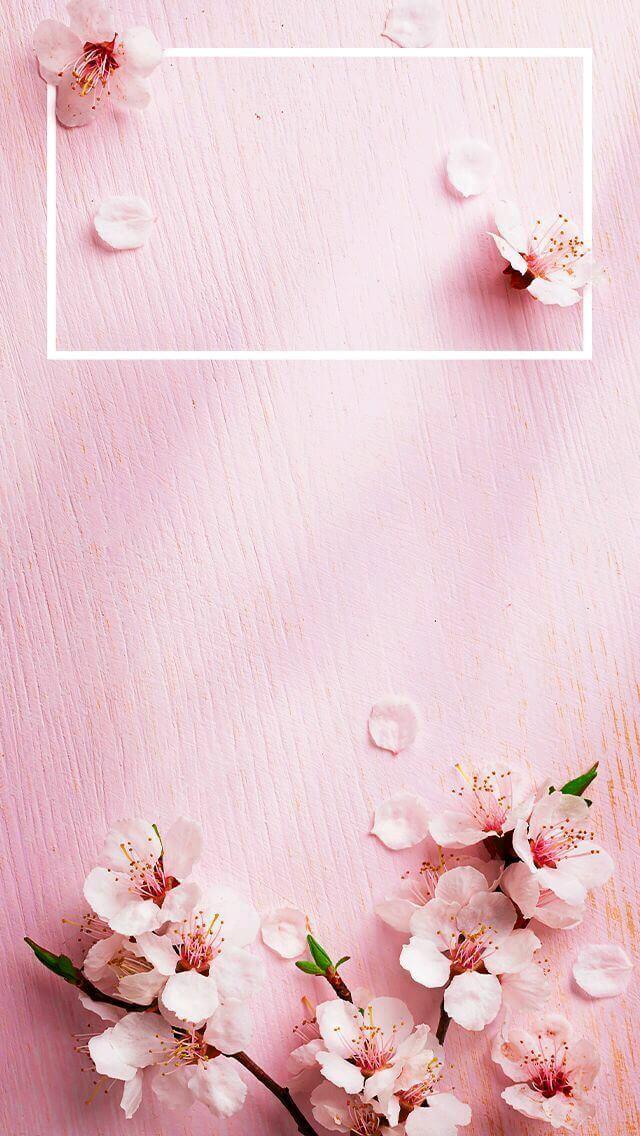 صورة خلفيات وردية , اجمل خلفيات للورد