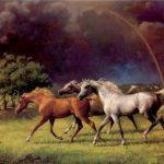 خيول عربية , صور اجمل الخيول العربية الاصيلة