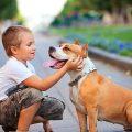 معلومات عن الحيوانات , معلومات مفيدة جدا عن تربية الحيوانات