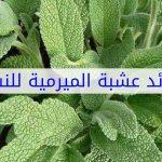 عشبة الميرمية , فوائد عشبة الميرمية واستخداماتها