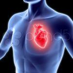 صور قلب الانسان , صور توضح شكل القلب