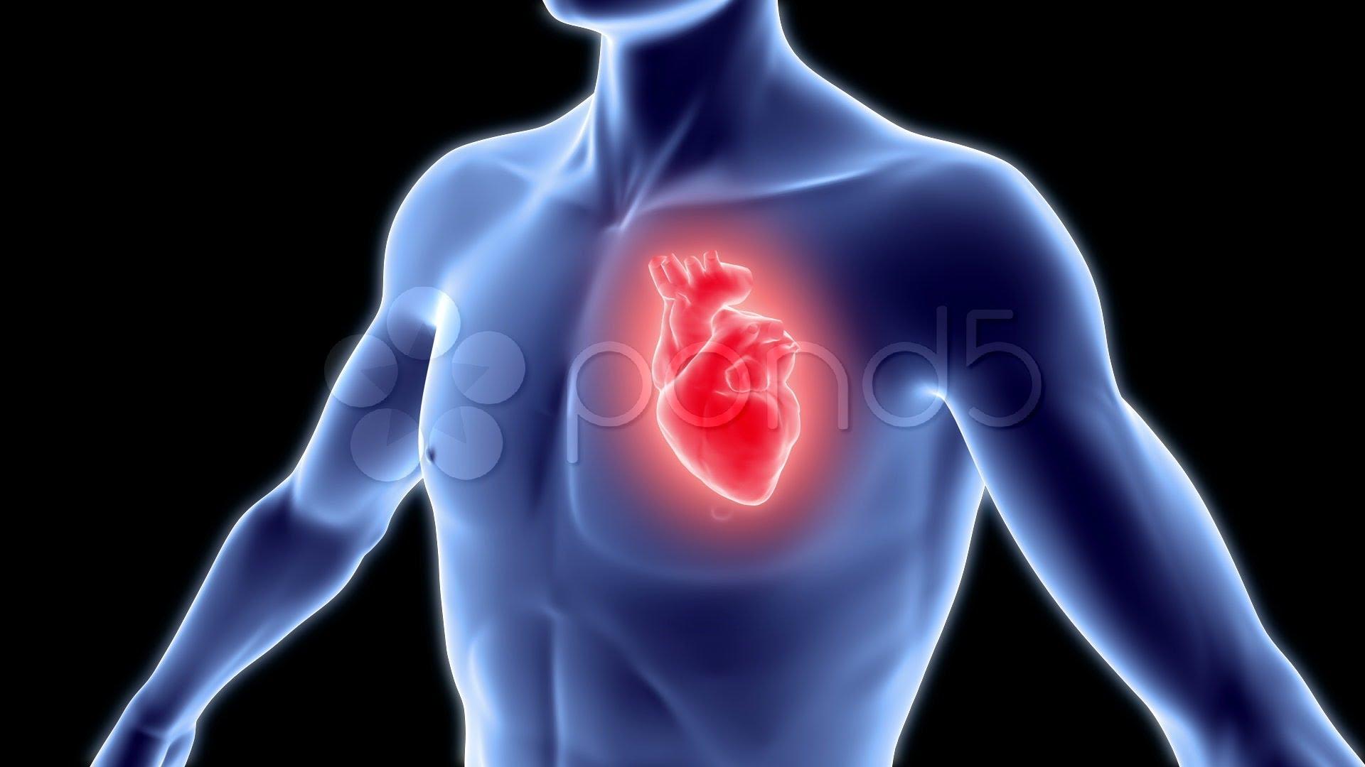 صور صور قلب الانسان , صور توضح شكل القلب