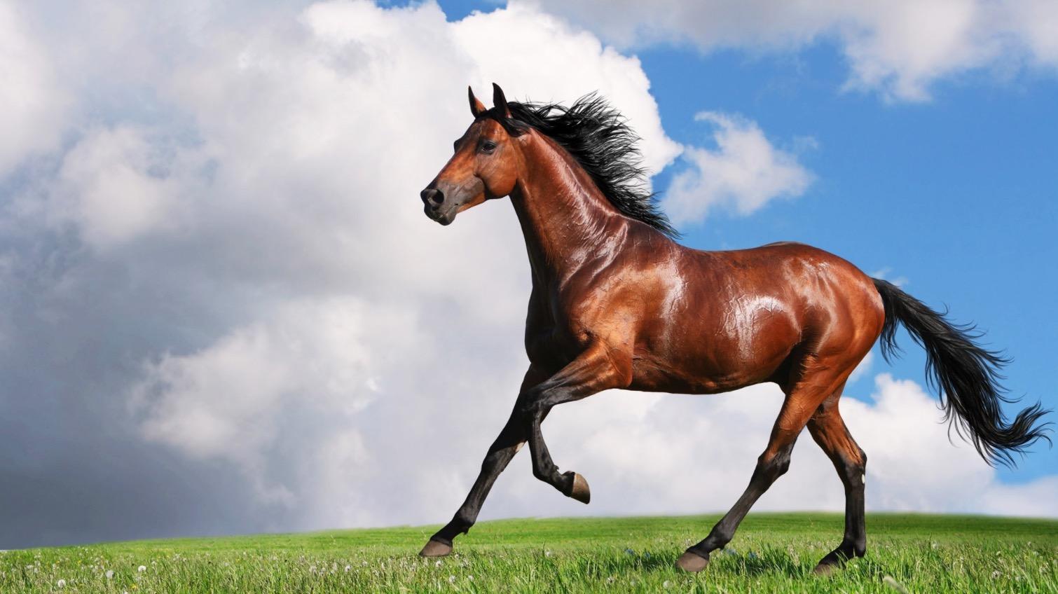 صورة صور حصان , صور احصنه جميلة جدا