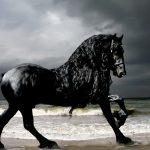 صور حصان , صور احصنه جميلة جدا