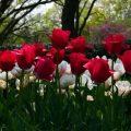 ازهار جميلة , اجمل بوكيهات الورد الطبيعية