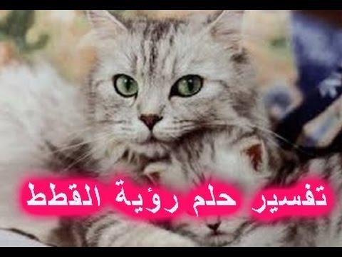 صورة رؤية القطط بالمنام , طريقة تفسير الاحلام