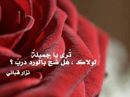 صورة خواطر عن الورد , اجمل ما قيل فى مدح الورد