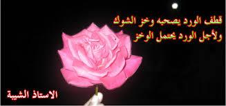 صورة خواطر عن الورد , اجمل ما قيل فى مدح الورد 1021 4