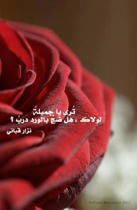 صورة خواطر عن الورد , اجمل ما قيل فى مدح الورد 1021