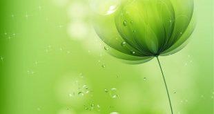 صورة خلفية خضراء , اجمل الخلفيات الخضراء للهواتف والكمبيوتر