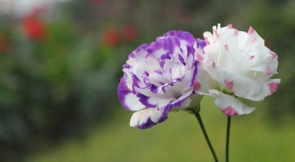 صورة اجمل صور الورد , صورة اجمل الازهار البرية