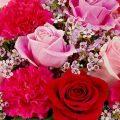 خلفيات ورود جميلة جدا , اجمل صورة ازهار طبيعيه روعه