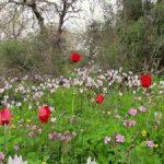 صور فصل الربيع , صوره طبيعيه لاجمل فصول العام
