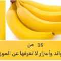 ماهي فوائد الموز , الموز واهم فوائده لجسم الانسان