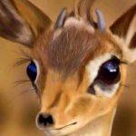 عيون الريم , اجمل صور عيون لحيوان الغزلان