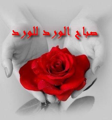 صورة صباح الورد للورد , اجمل صباح الورد على عيون الورد