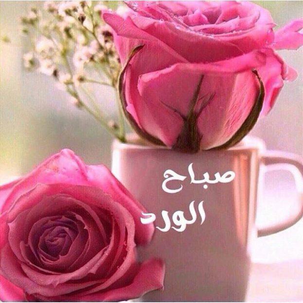صورة صباح الورد للورد , اجمل صباح الورد على عيون الورد 3099 2