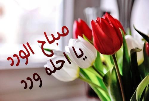 صورة صباح الورد للورد , اجمل صباح الورد على عيون الورد 3099 4
