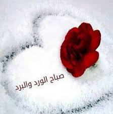 صورة صباح الورد للورد , اجمل صباح الورد على عيون الورد 3099 7