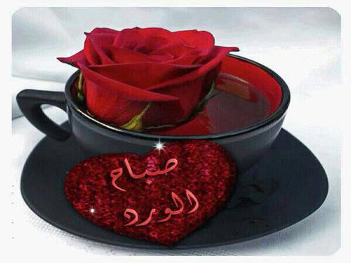 صورة صباح الورد للورد , اجمل صباح الورد على عيون الورد 3099 8