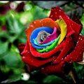 صور ورود طبيعيه , جمال الورد وطبيعتها الجذابه