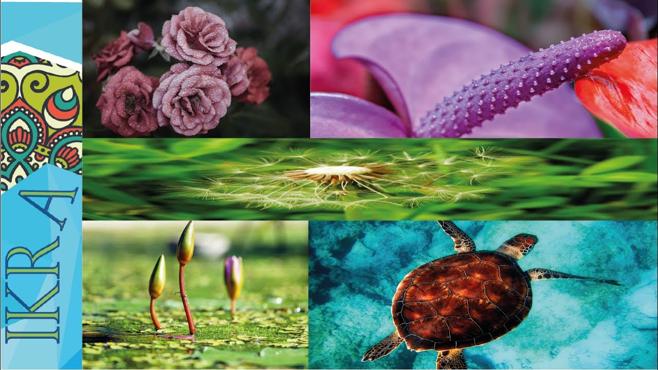 صورة خلفيات طبيعية ساحرة , اجمل خلفيات طبيعيه