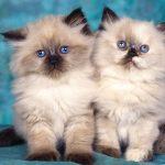 قطط جميلة , اجمل صور قطط متنوعة