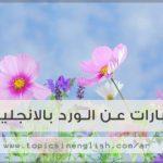 كلمات عن الورد , اروع صور الورود