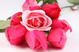 صورة اجمل الورود في العالم , احلى صور ورود روعة