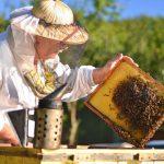 تربية النحل , كيفية تربية النحل بطريقة مبسطة