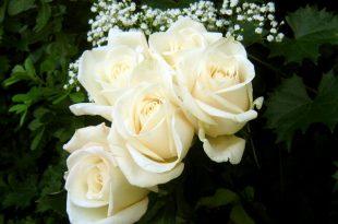 صورة صور اجمل الورود , اجمل باقات الورد