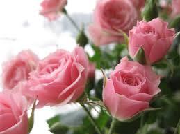 صورة صور اجمل الورود , اجمل باقات الورد 5076 3