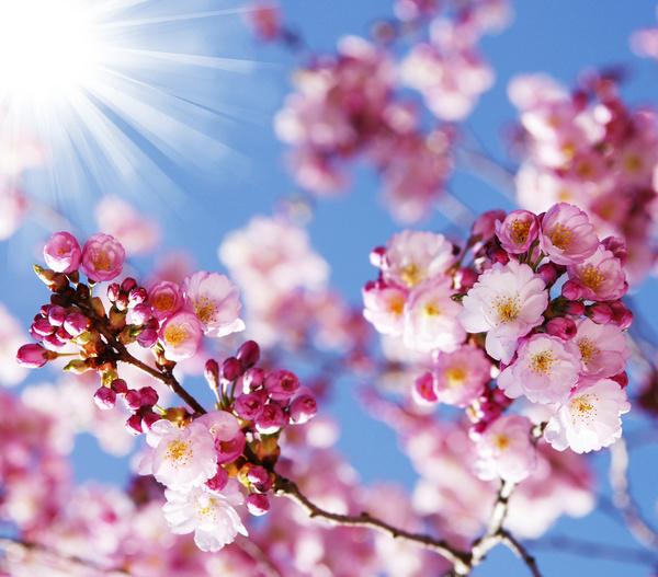 صورة صور خلفيات ورد , ارق صور الورد جميلة جدا