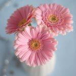 صور خلفيات ورد , ارق صور الورد جميلة جدا