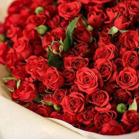 صورة صور خلفيات ورد , ارق صور الورد جميلة جدا 511 4