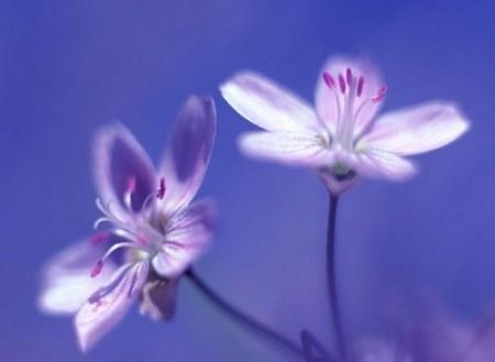 صورة صور خلفيات ورد , ارق صور الورد جميلة جدا 511 5