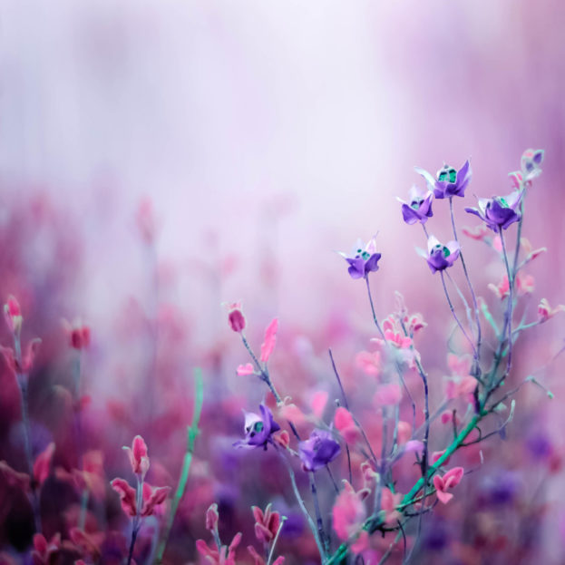 صورة صور خلفيات ورد , ارق صور الورد جميلة جدا 511 7