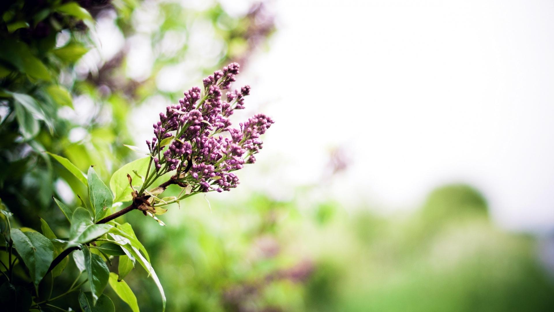 صورة صور خلفيات ورد , ارق صور الورد جميلة جدا 511 9