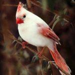 اجمل الطيور في العالم , اشكال ملونة ورائعة لطيور نادرة