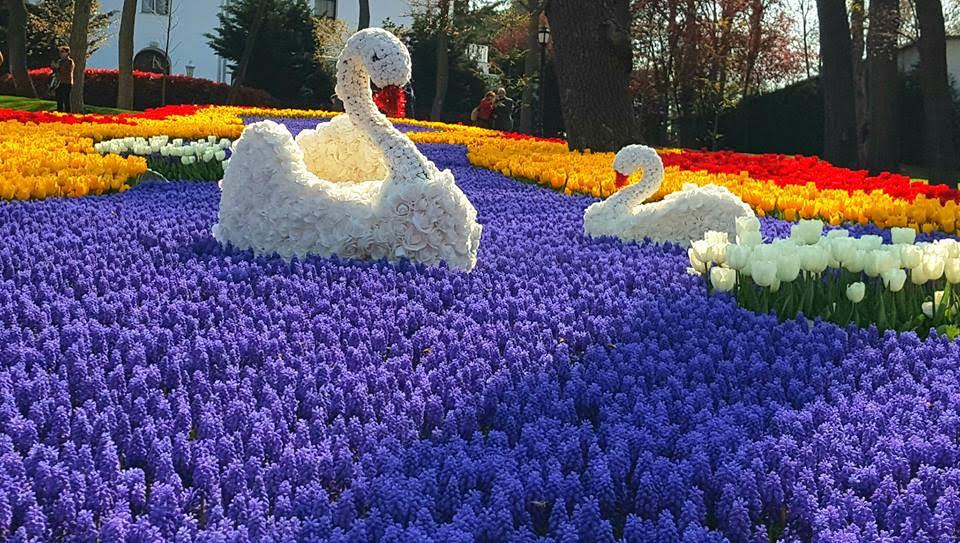صورة زهور جميلة , زهره الربيع الاجمل