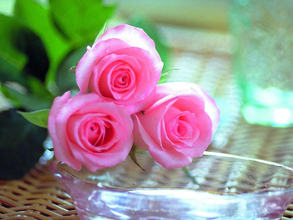 صورة صور عن الورد , صور عن الورد رؤعة مفيش اجمل منها 516 5