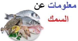 صورة معلومات عن الاسماك , مجموعه معلومات عن الاسماك نادره