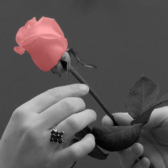 صور كلمات جميلة للحبيبة , اروع صور مميزة للاحباء
