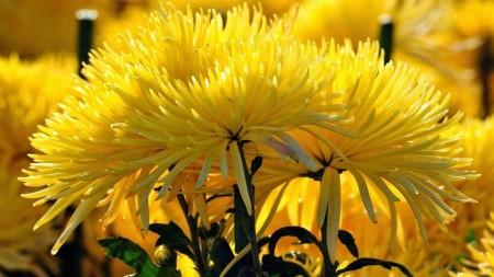صورة صور زهور , اروع صور الورد